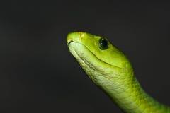 Mamba verde Fotos de Stock