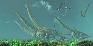 Mamenchisaurus Dinosaur Travels. Pteranodon reptiles fly over a herd of Mamenchisaurus dinosaurs in the Cretaceous Era Stock Images