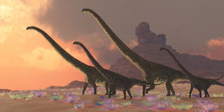 Mamenchisaurus Dinosaurs Royalty Free Stock Photo