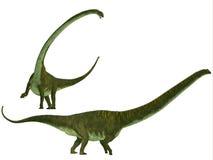 Mamenchisaurus hochuanensis. Mamenchisaurus was a plant-eating sauropod dinosaur from the late Jurassic Period of China Royalty Free Stock Image