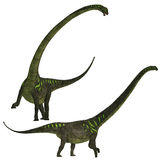 Mamenchisaurus youngi. Mamenchisaurus was a plant-eating sauropod dinosaur from the late Jurassic Period of China Stock Images
