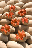 Mamey Royalty Free Stock Image