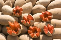 Mamey Royalty Free Stock Photo