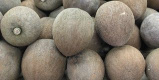 Mamey Sapote Royalty Free Stock Photo