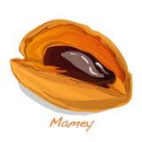 Mamey vector illustration Royalty Free Stock Photo