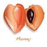 Mamey vector illustration Royalty Free Stock Image