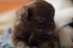 Mamífero del perro Fotos de archivo libres de regalías