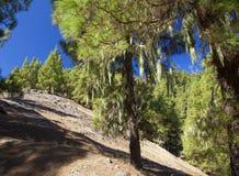 Mamie Canaria, augmentant le chemin Cruz de Tejeda - Teror Images libres de droits