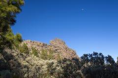 Mamie Canaria, les régions les plus élevées de l'île, Las Cumbres Photographie stock
