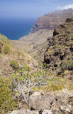 Mamie occidentale Canaria, mai Photo libre de droits