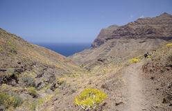 Mamie occidentale Canaria, mai Photos libres de droits