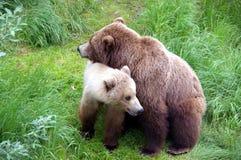 Mamma-beer met een jong geitje Stock Afbeeldingen