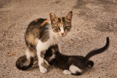 Mamma del gatto con il suo gattino del bambino immagini stock libere da diritti
