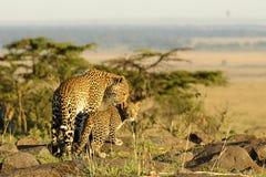 Mamma del leopardo ed il suo bambino, Kenia Fotografie Stock Libere da Diritti