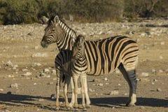 Mamma e bambino, Namibia Fotografia Stock