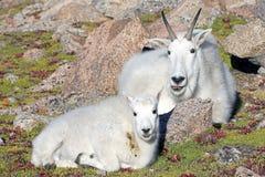 Mamma en `-Jong geitje ` stock fotografie