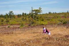 Mamma met dochter piking Amerikaanse veenbes Stock Foto's