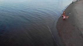 Mamma och dotter, körning, lek med en brun hund labrador på stranden vid floden Flyg- filmande stock video