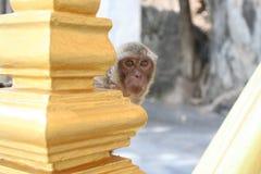 Mamma waar u, aap bent Stock Afbeeldingen