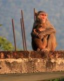Mammaapan med behandla som ett barn apan Royaltyfri Foto