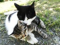 Mammaförälskelse arkivbilder