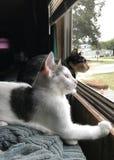 Mammakat en katje Stock Foto