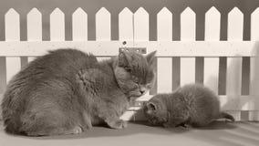 Mammakatt och kattungestående framme av ett vitt staket arkivfilmer