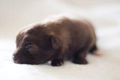 mammal собаки Стоковые Фотографии RF