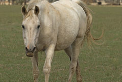 Mammal Stock Photography