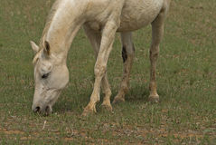 Mammal Royalty Free Stock Photography