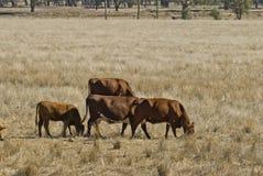 Mammal Stock Photos