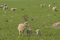 Mammal Stock Image