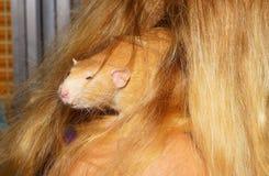 Mammal, Fauna, Rat, Whiskers