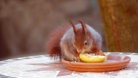Mammal, Fauna, Squirrel, Rodent Stock Photos