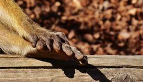 Mammal, Fauna, Wildlife, Old World Monkey Stock Photography
