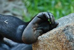 Mammal, Great Ape, Organism, Primate