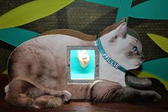 Mammal Heart. Three dimensional image of a mammal cat heart Stock Photo