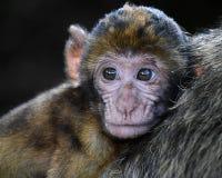 Mammal, Macaque, Fauna, Primate
