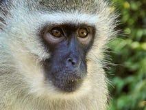 Mammal, Macaque, Fauna, Primate Stock Photo
