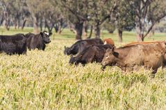 Mammal Royalty Free Stock Photos