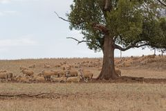 Mammal Royalty Free Stock Photo