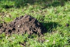 Mammal signs - European mole hill Royalty Free Stock Photography
