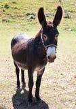 Mammalian farm. Domestic animal of donkey farm Stock Photo