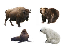 Mammals of Russia on a white background royalty free stock images