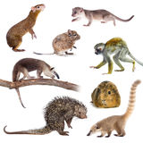 Mammals of South America on white stock photography