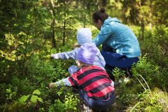 Mamman och barn tar blåbär i en grön sommarskog på en ljus solig dag Familjen samlar bär i skogen arkivfoto