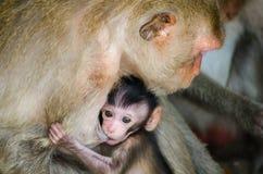 Mamman och behandla som ett barn apor Arkivbild