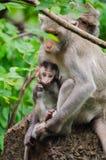 Mamman och behandla som ett barn apor Royaltyfria Bilder