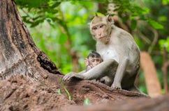 Mamman och behandla som ett barn apor Royaltyfri Fotografi