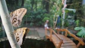 Mamman och dottern går i en tropisk trädgård Härliga fjärilar sitter på trädet 4K långsam mo stock video